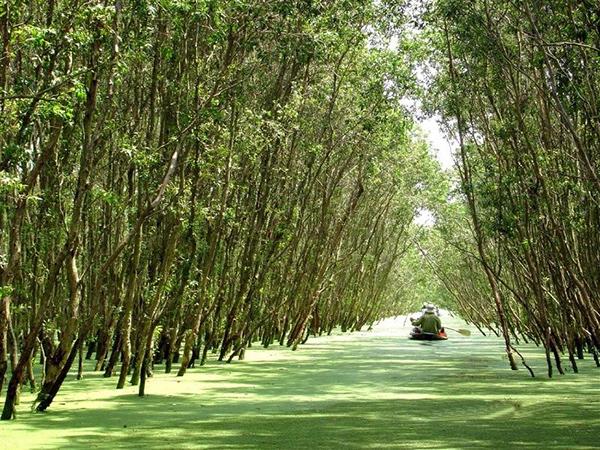 Khám phá 6 khu rừng tràm tuyệt đẹp ở Miền Tây